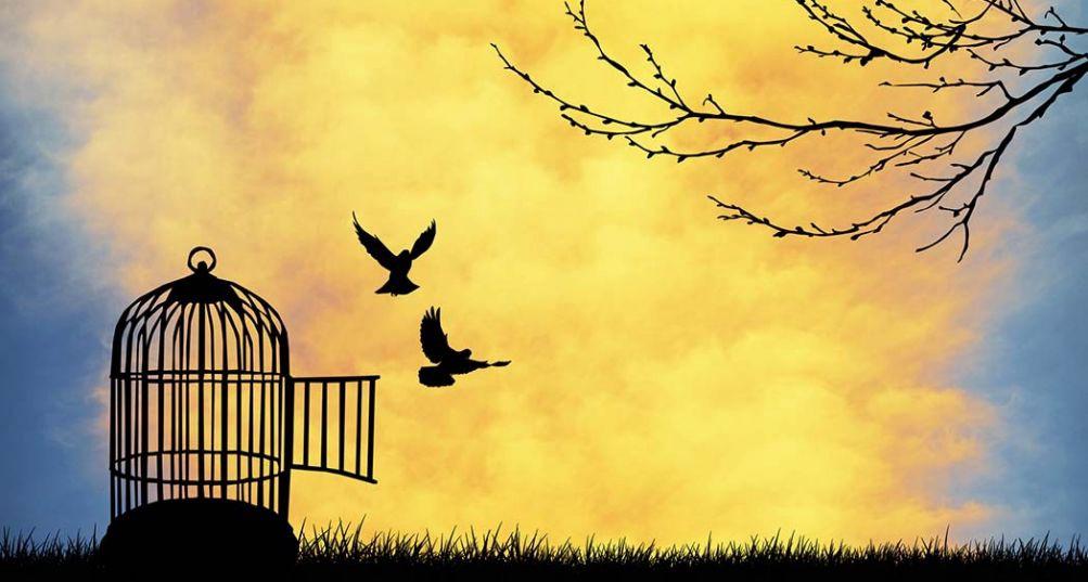 comment etre libre